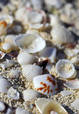 The big amount of shells laying in the sand macro shot Stock Image