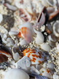 The big amount of shells laying in the sand macro shot Royalty Free Stock Photo