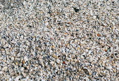 The big amount of small shells laying on the ground Stock Image