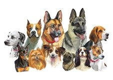 Free Big And Small Dog Breeds 2 Royalty Free Stock Images - 166289699