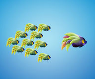Big angelfish leading group of angelfish Royalty Free Stock Photography