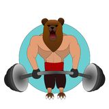 The big angry bear with the human body in the gym raises the rod. weight lifter. Royalty Free Stock Image