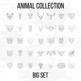 Big animal set Stock Photo