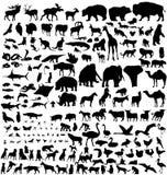 Big animals collection Stock Photos