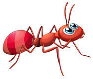 A big ant crawling. Illustration of a big ant crawling on a white background Royalty Free Stock Images