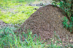 Big ant hill Royalty Free Stock Photo