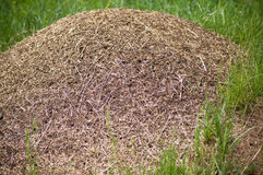 Big anthill Royalty Free Stock Photo