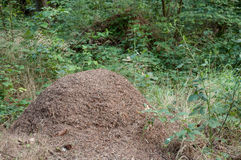 Big anthill Royalty Free Stock Photos