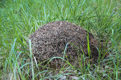 Big anthill in the reen grass Royalty Free Stock Image