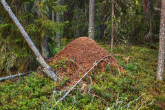 Big anthill Stock Photos