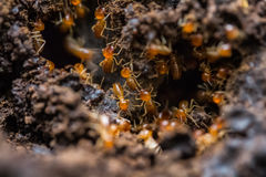 Big ants Stock Photography