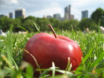 Big apple. The big apple in the central park nyc Royalty Free Stock Photo