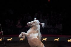 Big Apple Circus. NEW YORK, NEW YORK - NOVEMBER 15: Horse performs trick during Big Apple Circus show.  Taken November 15, 2007 in New York City Stock Images
