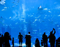 Big aquarium. Silhouettes of people against a big aquarium Stock Image