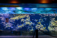 Big Aquarium Custo Stock Photography