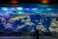 Big Aquarium Custo. There's the big aquarium in Museum of Oceanography in Monaco, May 2015 Stock Photography