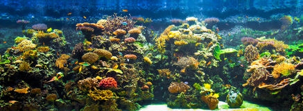 Big aquarium panorama Royalty Free Stock Images