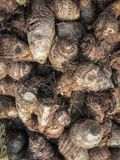 Big Arbi (Colocasia) on display. Big Arbi (Colocasia) displayed in a grocery originally from India for sale Stock Image
