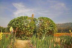 Big artificial pumpkin at Jim Thomson farm Stock Photography