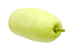 A big asian  squash Stock Image