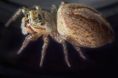 Big ass spider and small hut macro photography.  stock photos