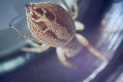 Big ass spider and small hut macro photography.  stock photo