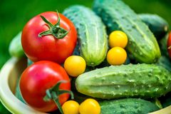 Big Autumn Harvest. Shot Of Bucket Of Freshly Picked Ripe Red Tomatoes, Cucumbers And Small Yellow Plums Stock Photo