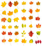 Big autumn leaves set Stock Image
