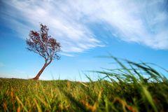 Big autumn oak and grass on a meadow around Lonely beautiful autumn tree. Silhouette solitary tree. royalty free stock photography