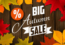 Big autumn sale. Autumn leaves Stock Photos
