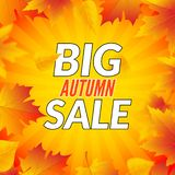 Big autumn sale design template poster. Fall promotional flyer. Autumn Discounts offers design with leaves.  royalty free illustration