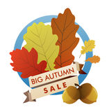 Big autumn sale. Vector label, banner - big autumn sale - with the oak leaves, acorns and text ribbon Vector Illustration