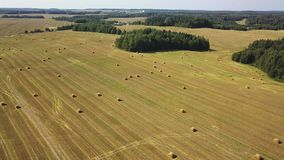 A big autumn yellow field with hay or straw bales under blue sky with cirrus clouds. stock video