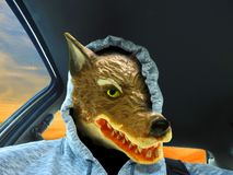 Big bad wolf car driver wearing a hoodie disguise. Concept photo of a big bad wolf driving a car wearing a hoodie for disguise stock photo