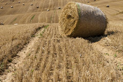 The Big bale. Big bale on a field Royalty Free Stock Photo