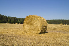 Big bale of straw on the field a round shape Royalty Free Stock Photos
