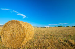 Big bale of straw left in the countryside in a perfect sunny day Stock Images