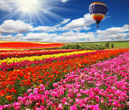 Big balloon over field of flowering Royalty Free Stock Photography