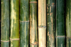 Big bamboo fence background Stock Image