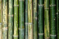 Big bamboo fence Stock Image
