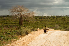 Big baobab tree surrounded by African Savannah with dirt track n Stock Photo