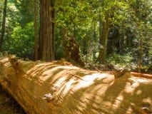 Big Basin Redwoods State Park Stock Images