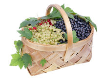 Big basket with currant isolated Royalty Free Stock Photos