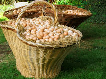 Big basket with eggs. A big basket with thousands of eggs Royalty Free Stock Image