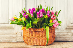 Big basket full of many fresh colorful tulips Stock Photography