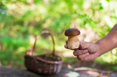 Big basket with mushrooms on old tree in autumn Royalty Free Stock Images