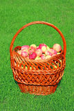 Big basket with red apples Stock Photo