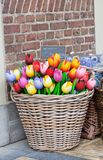 Big basket with tulips Royalty Free Stock Image