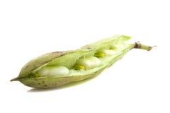 Big bean Stock Photos