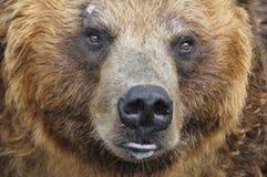 Big bear Stock Photos